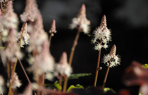 concours photos plantes vivaces