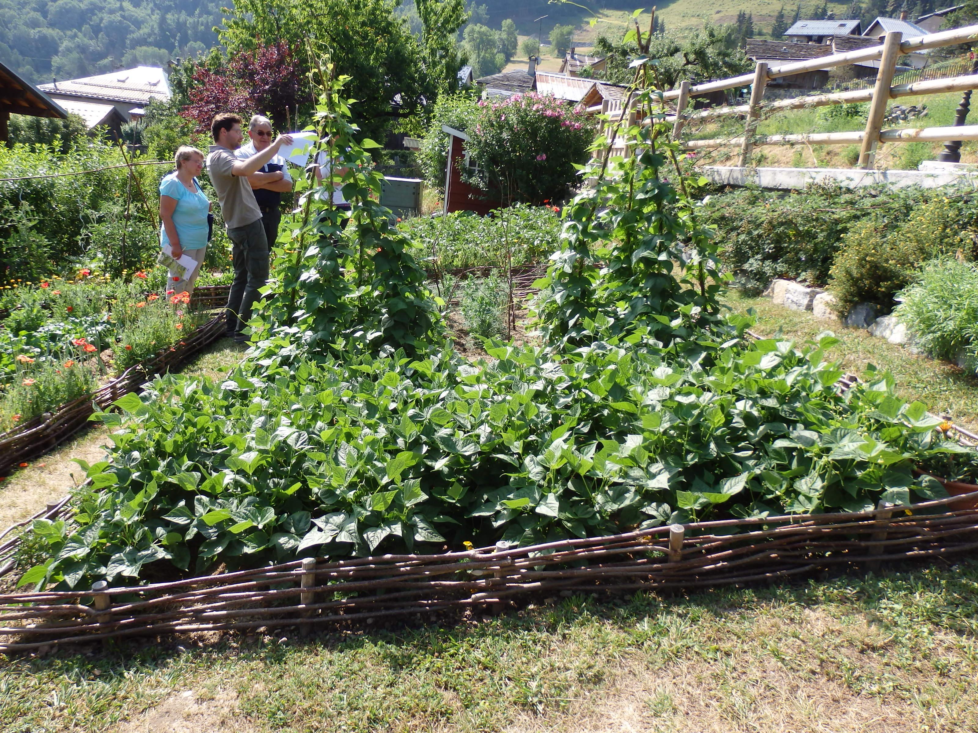 Jardin potager petit potager en carr agrandir luimage for Conseil plantation jardin