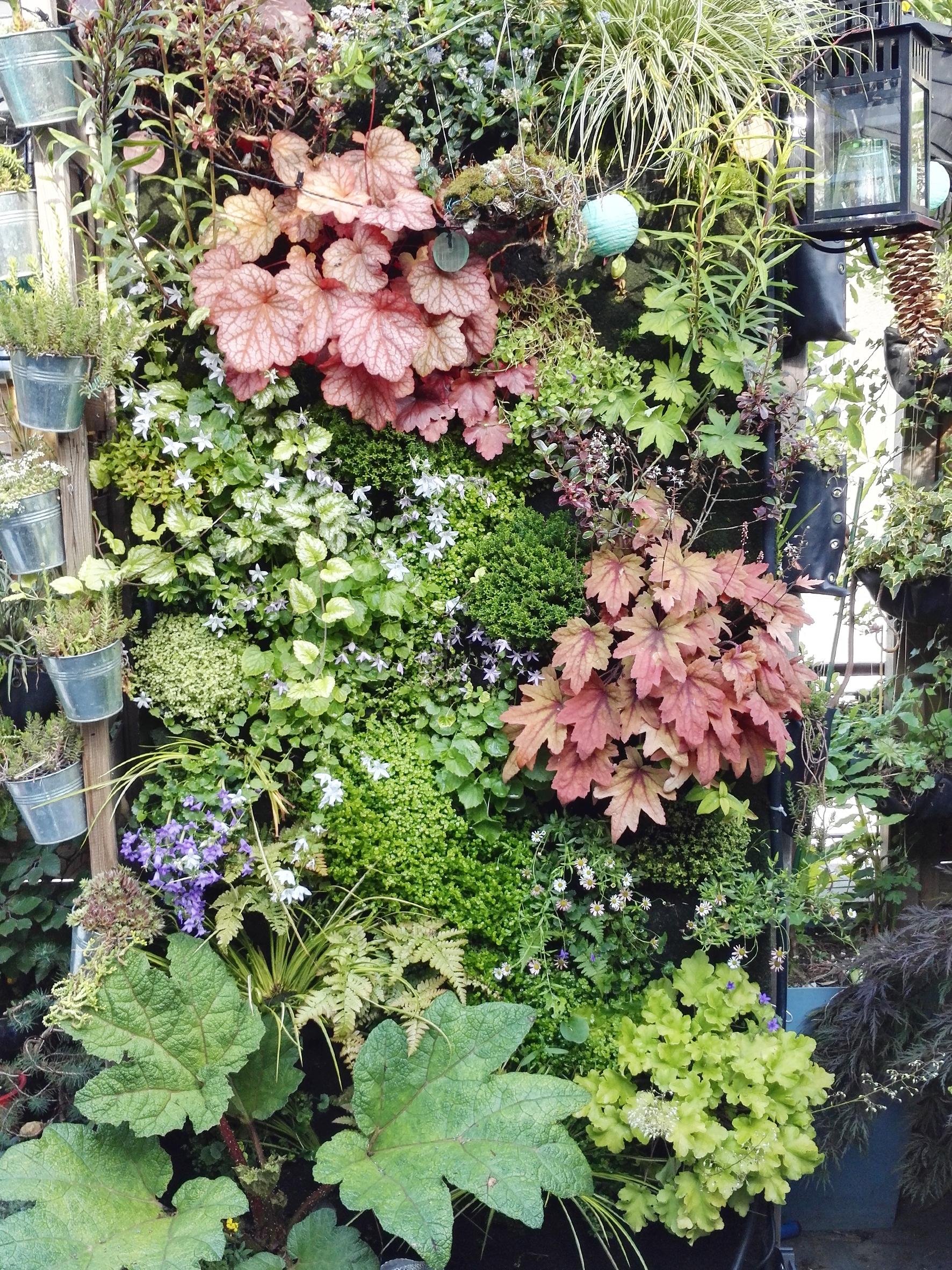 les laur ats 2016 du concours photos plantes vivaces soci t nationale d 39 horticulture de france. Black Bedroom Furniture Sets. Home Design Ideas