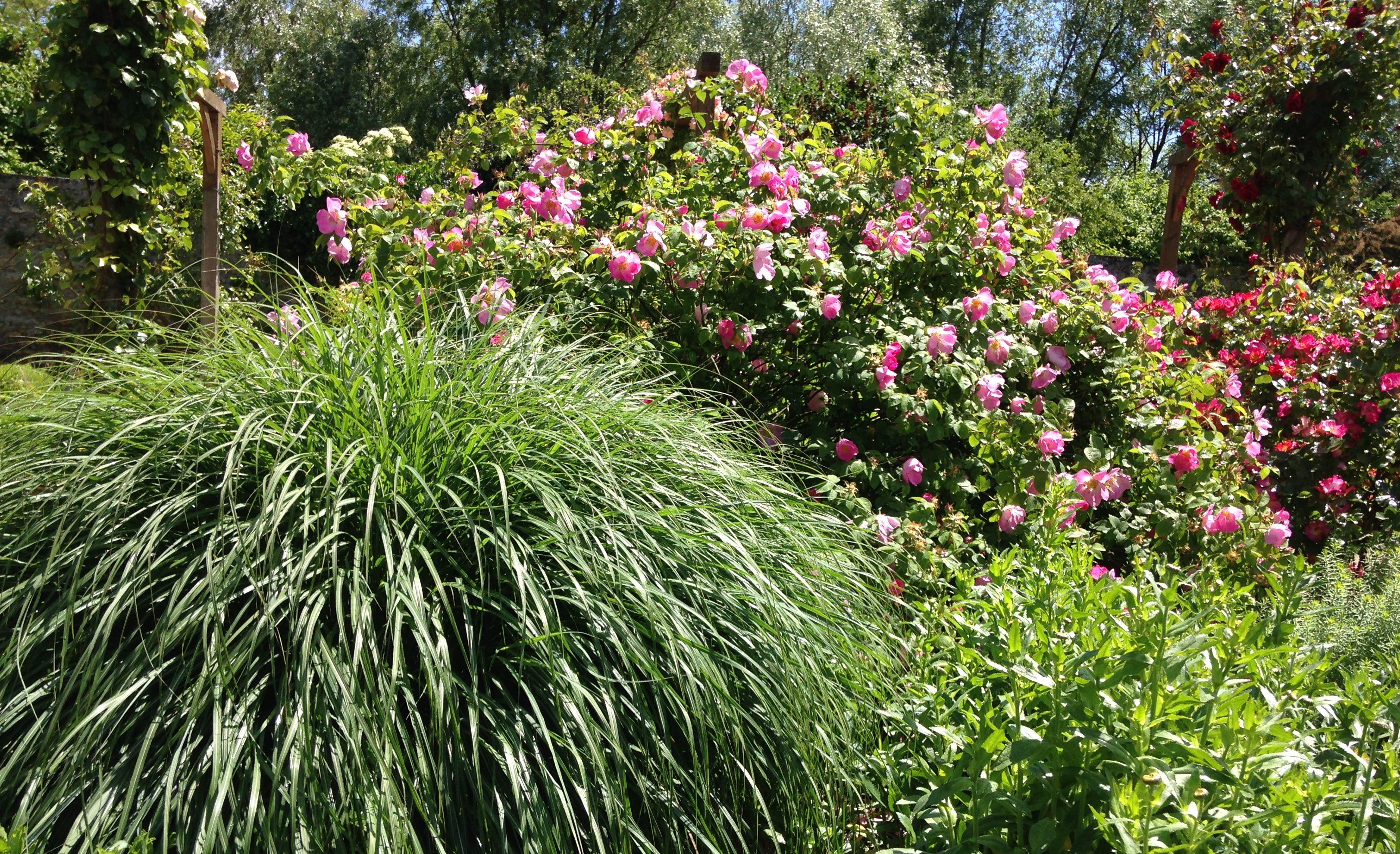 Les rosiers ont de nombreux atouts pour les jardiniers amateurs