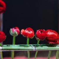 Art floral à la SNHF, le sacre du printemps