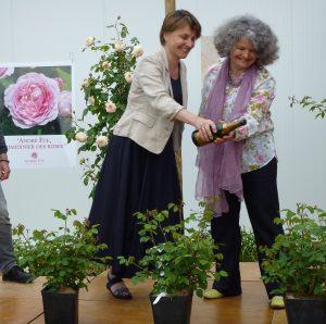 Rose André Eve le jardinier des roses