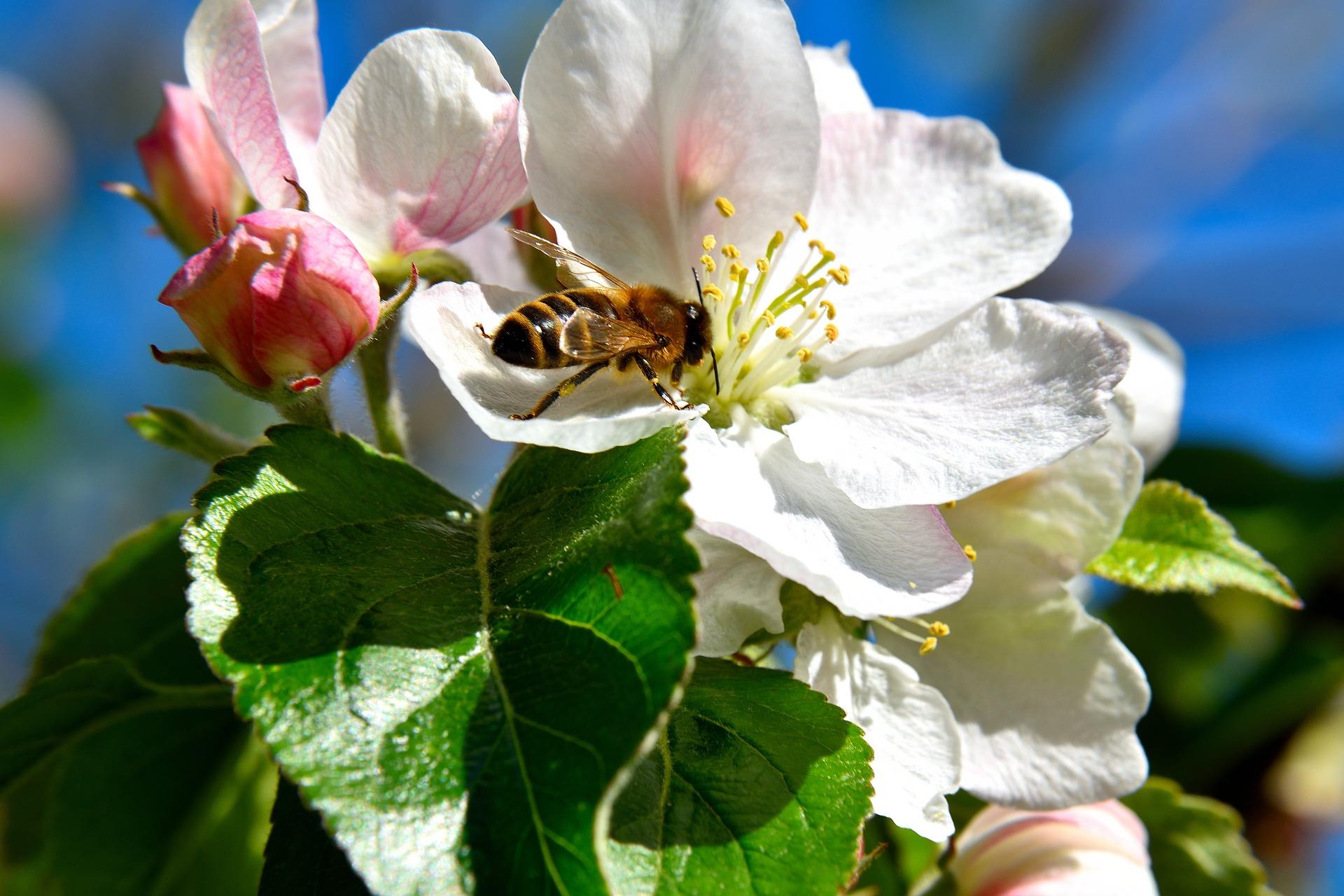 Liste des plantes attractives pour les abeilles tous for Plante pour tous