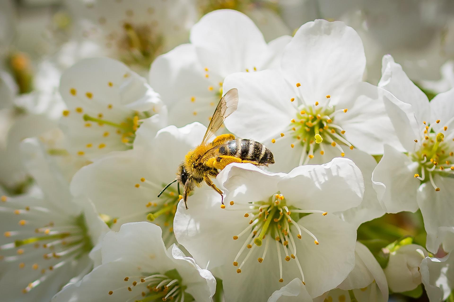 Fleur de cerisier vidéos xxx
