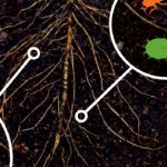 Les sols : sources de vies