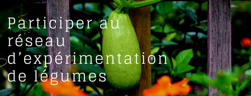 Participer au réseau d'expérimentation de légumes (1)