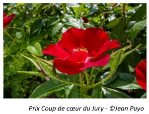 Prix Coup de coeur du Jury - ©Jean Puyo