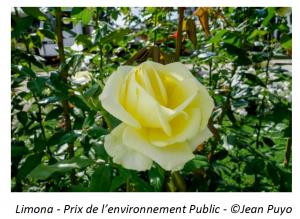 Limona - Prix de l'environnement Public - ©Jean Puyo